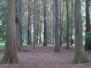 Arboretum w Rogowie
