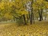 Park miejski w Brzezinach